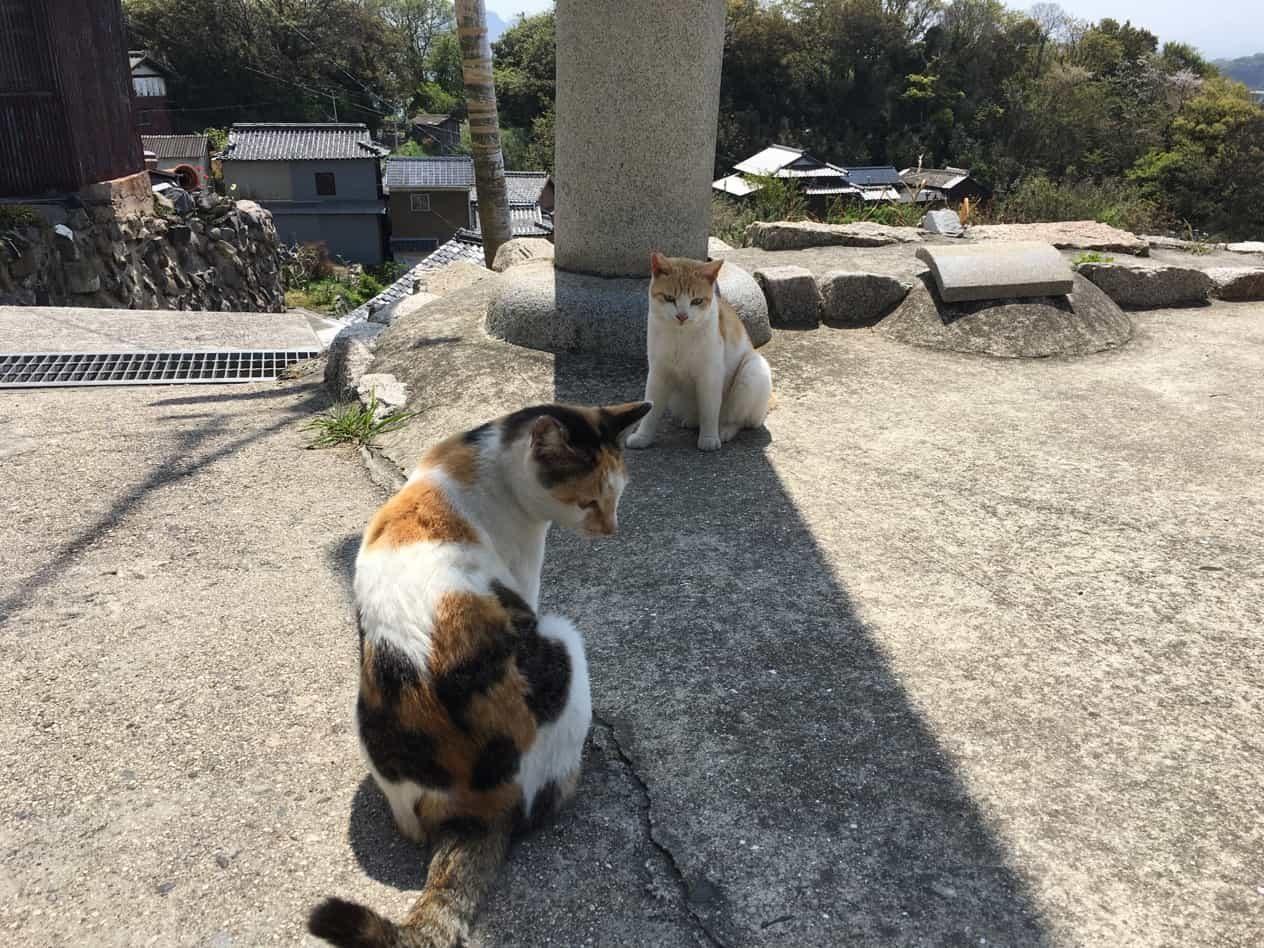 ネコのたくさんいる男木島